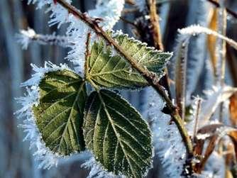 Nach Der Kältewelle: Pflege Für Die Pflanzen Im Garten