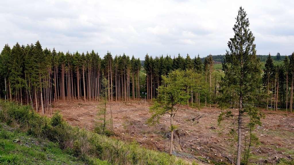 Ganz und zu Extrem Sturm und Käferplage: Kleine Waldbesitzer am Möhnesee haben genug #RQ_21