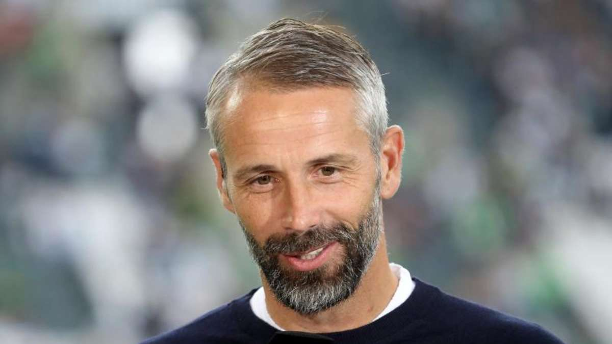 Trainer Gladbach