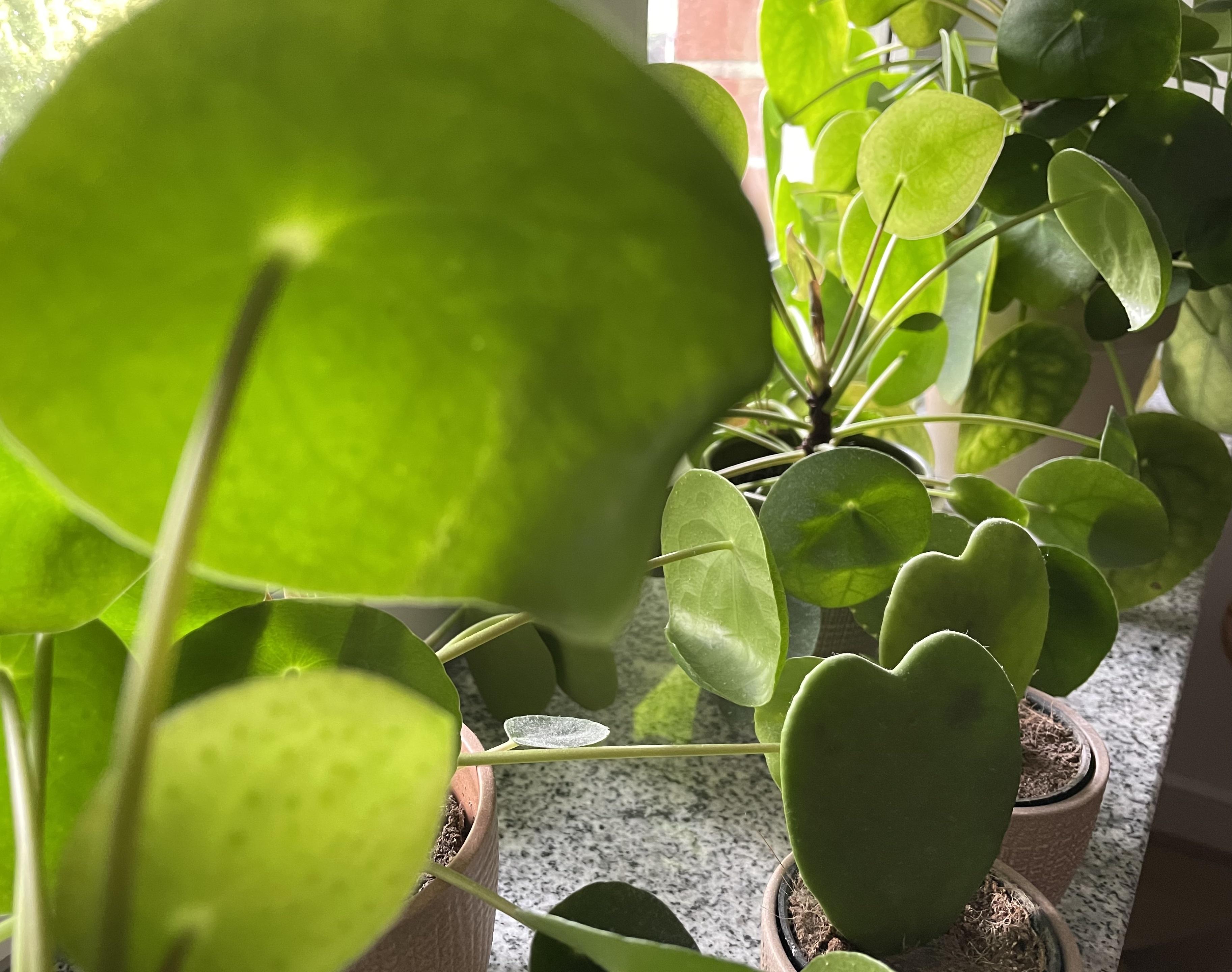 Pflegeleichte Pflanzen für die Wohnung: Diese Gattungen überleben auch ohne grünen Daumen