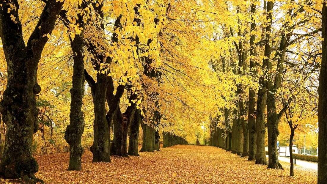 Oktober Leserbild Konstanze Kubath